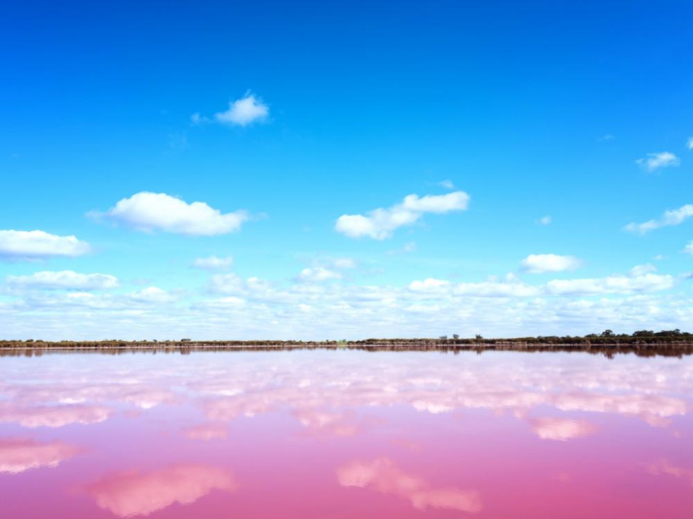 80 Gambar Pemandangan Warna Pink